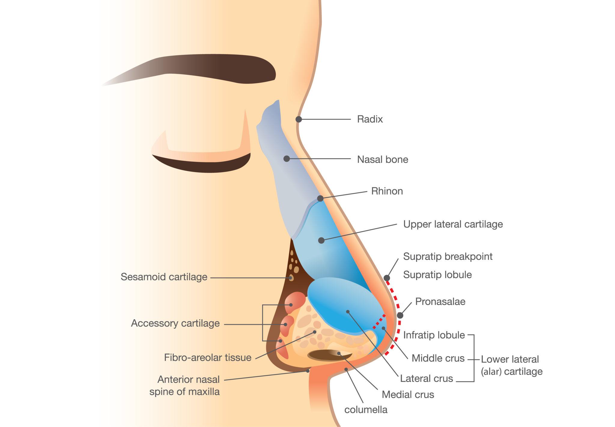 Rinoplastía Funcional » San Juan, PR - Dr. Luis Tarrats